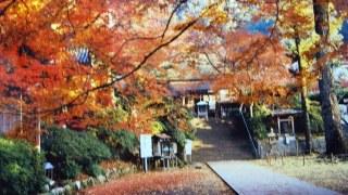 秋ですね(^O^)